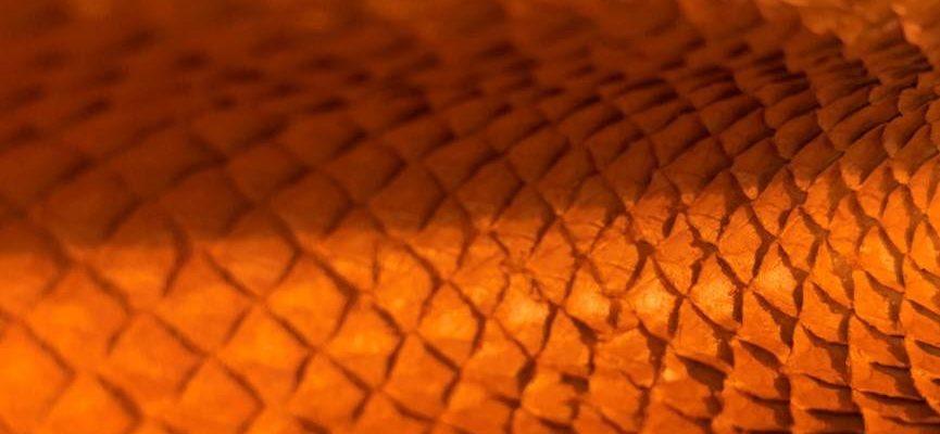 Détail dun cuir de saumon par la marque Ictyos