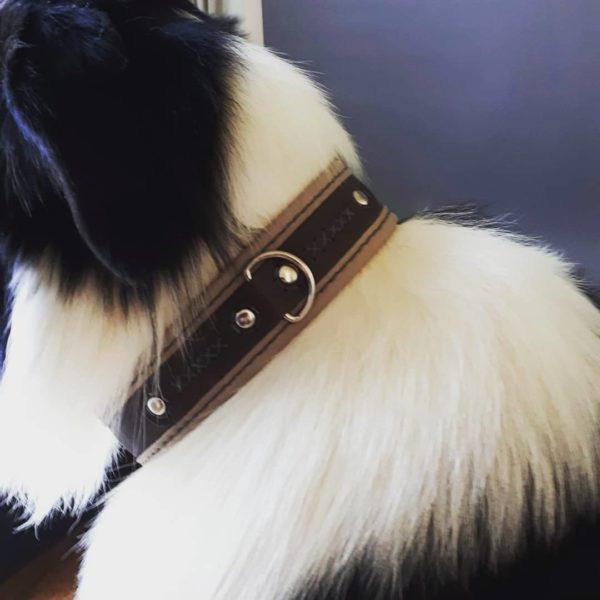 Colloer chien en cuir sur mesure